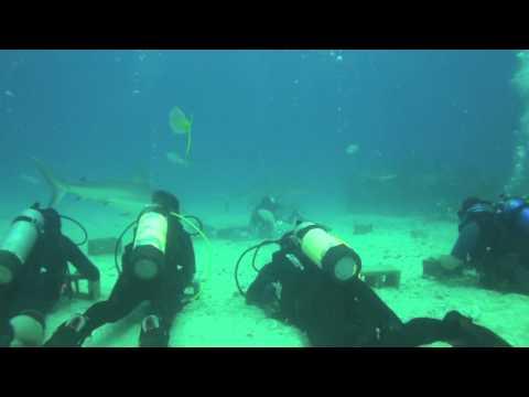 Week 11, 2011 - Shark Dive ( Daily Log, Mar 15 ) Ocean Explorers Dive Center in St. Maarten