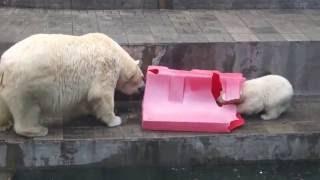 Новосибирский Зоопарк 2016...... кто не спрятался от жары, попал в кадр;)