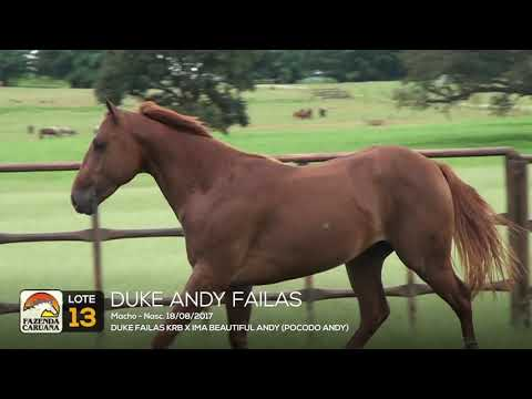 LOTE 13 - DUKE ANDY FAILAS