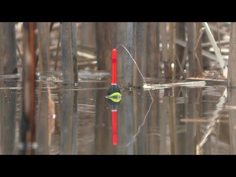 Ловля карася весной на поплавок.  Рыбалка на удочки в тихой заводи.