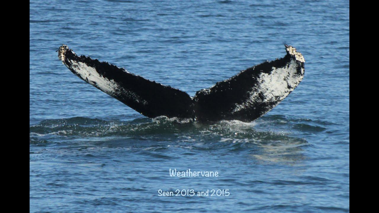 Rudee Flipper Whale Watching 2017 Virginia Beach