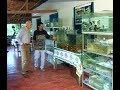 Reportagem do Globo Rural sobre a piscicultura ornamental em Muriaé, Minas Gerais