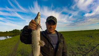 Ловля ЩУКИ на Спиннинг на малой реке в Сибири Рыбалка 2020
