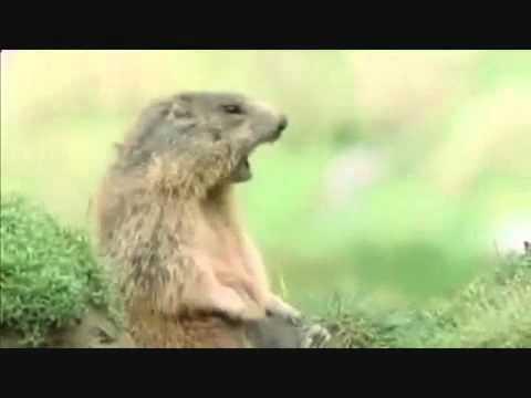funny squirrel allan allan allan steve steve steve