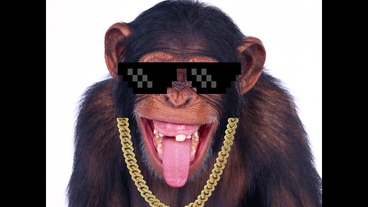 funny monkey smoking