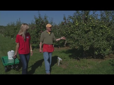 Man's love of apples fuels orchard business