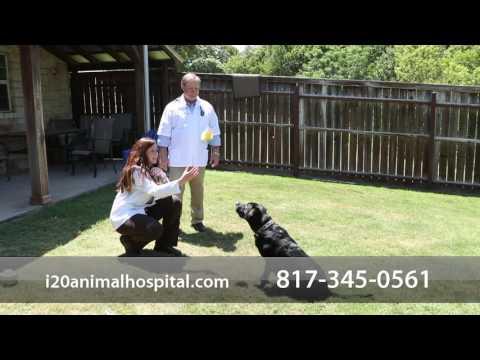I-20 Animal Hospital - Short | Hudson Oaks, TX