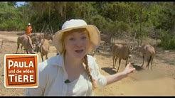 Im Reich der Antilopen (Doku)  Reportage für Kinder   Paula und die wilden Tiere