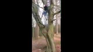 Упал с дерева  Смешной прикол