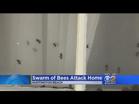 Swarm Of Bees Invades Huntington Beach Home