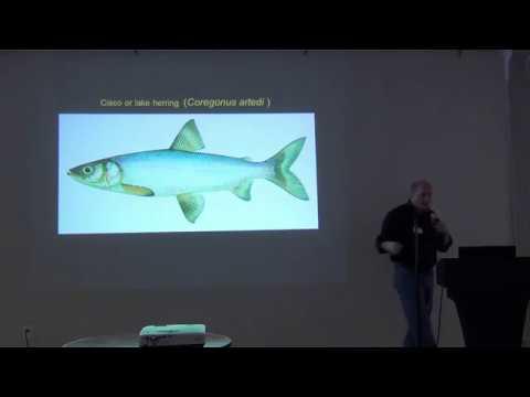 2018 Ludington Fishery Workshop – Charles Bronte, cisco rehabilitation