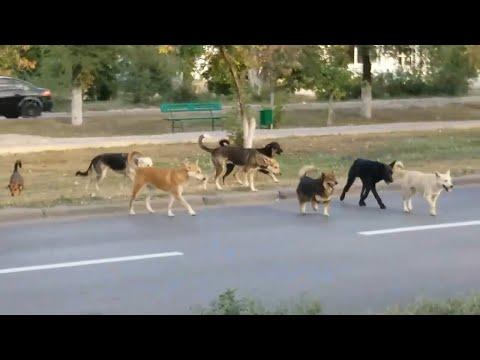 Волгоград: стаи бездомных собак