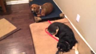 Doorbell Education - The Calm K9 Dog Training