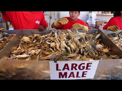 The Wharf L Best Place To Buy Seafood In Washington DC I USA