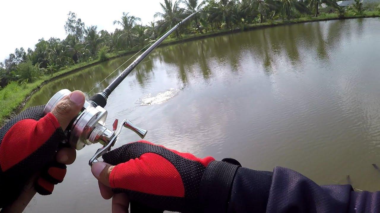 Cá Sắt Fishen Đụng Độ Khủng Long   Câu lóc bằng mồi cá sắt – Phần 3   Cá Sắt Orichi Cicada Fishen