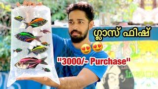 💥3000/- രൂപയുടെ എന്റെ പുതിയ മീനുകൾ | I bought new set of fishes | 3000/- Rs purchase