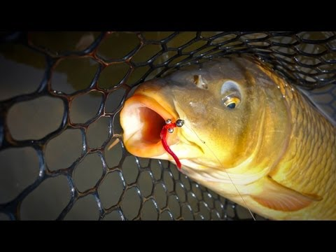 Colorado Trout And Arizona Catfish!! from YouTube · Duration:  4 minutes 22 seconds  · 7 views · uploaded on 11/4/2017 · uploaded by static420