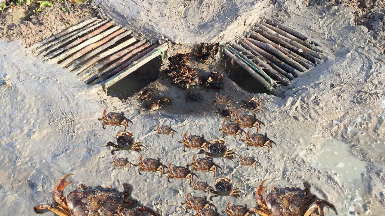 Smart Boy Make Easy 2 Deep Hole With Wood To Crab Trap How To Building Crab Trap