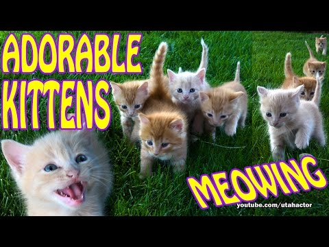 Four Week Old Kittens Meowing and Running on Grass CUTE! KAWAII!