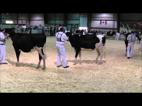 2012 Eastern Ontario - Western Quebec Championship Show - Class 6