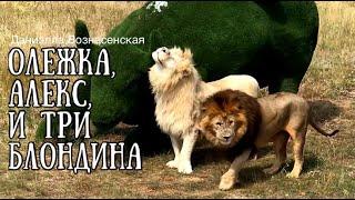 Нападение на льва Олежку