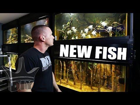 My Discus And Angelfish Aquariums