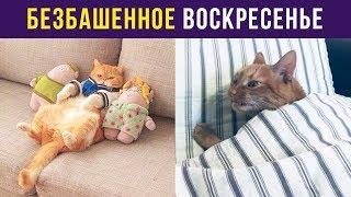 Приколы с котами. Безбашенное воскресенье | Мемозг #21