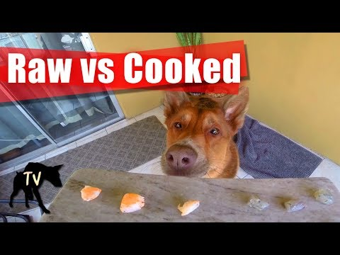 Raw vs Cooked Shrimp Taste Test Raw Feeding Compilation