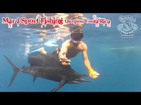 Sailfish Release in Quepos, Costa Rica with Mar1 Sport Fishing Quepos, Costa Rica Sailfishing