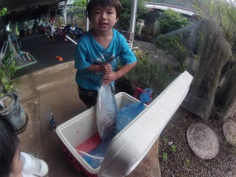 First Fish of 2016 - Outside Honolulu Harbor