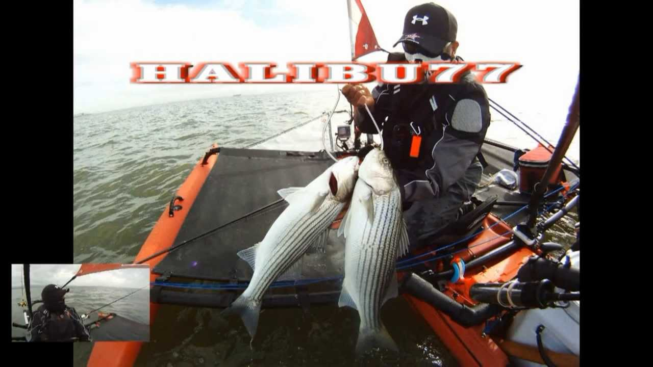 Kayak fishing in the san francisco bay high definition for Sf bay fishing report