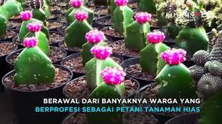 Kampung Kaktus Youtube