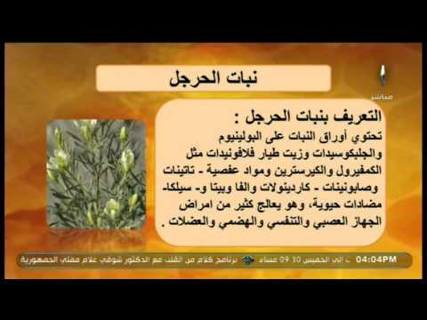 نبات الحرجل ي ستخدم في علاج المسالك البولية والقولون طب الأعشاب Youtube