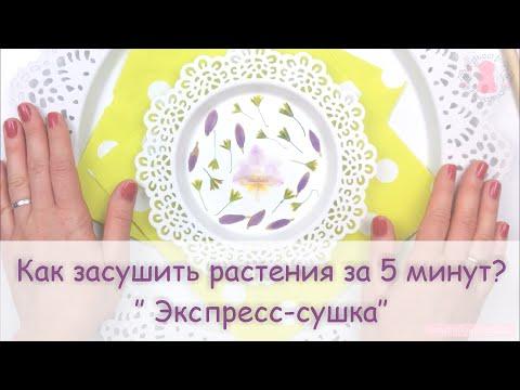 Как засушить цветы в микроволновке