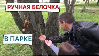 РУЧНАЯ БЕЛОЧКА БЕЗ ХВОСТА В ПАРКЕ ОТРАДНОМ/ГУЛЯЕМ В ПАРКЕ КИЕВА/Marina life/