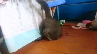 кошка застряла