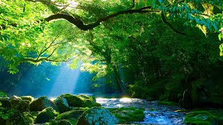 Relaxing Sleep Music: Deep Meditation Music, Stress Relief, Dancing with Nature By Tim Janis