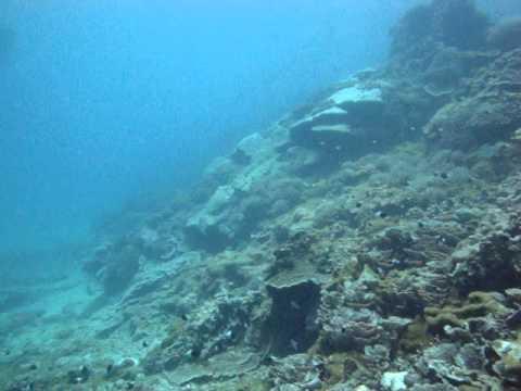 kisite, outer, reef, kenia, mpunguti, marine, national, park, diving, scuba, tauchen, nurkowanie, underwater, unterwasser