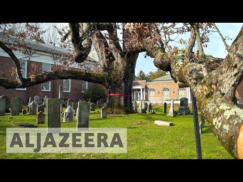 America's oldest oak tree to be cut down