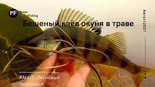 Рыбалка на окуня в траве Разведка по окунёвым местам БЕШЕНЫЙ КЛЁВ ОКУНЯ