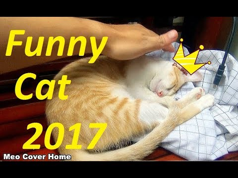 My Cat Sleeping So Nice | Funny Cat Vines 2017 | Meo Cover Home