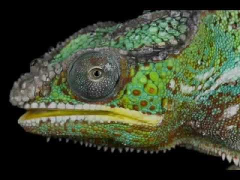 Jamie Lidell - Coma Chameleon