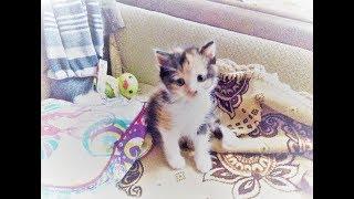 Маленькая кошка Мотя
