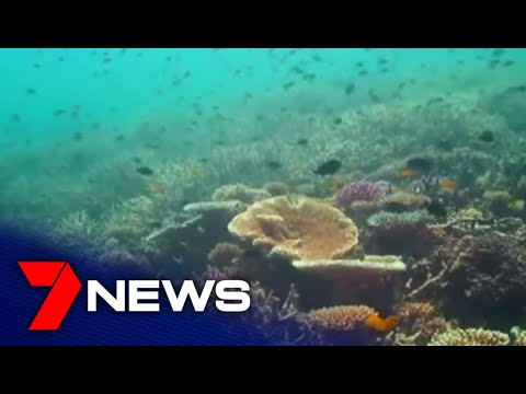 "Long-term outlook of Great Barrier Reef downgraded to ""very poor"" 