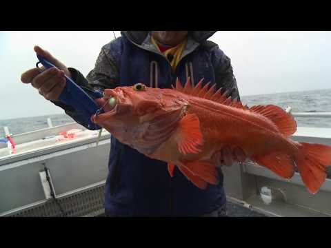 Fishing In Alaska With Alaskan Fishing Adventures
