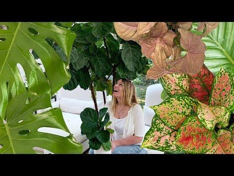 giant-house-plants:-when-little-plants-get-big!
