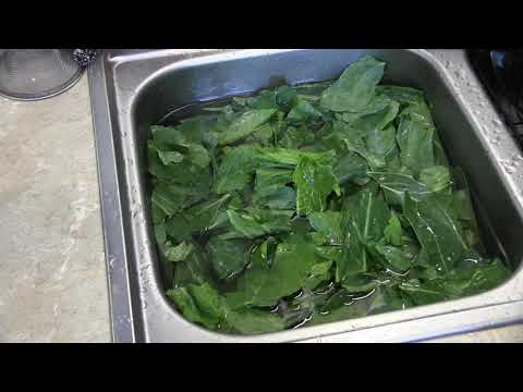 How to pick and clean collard greens and cook with some pigs feet