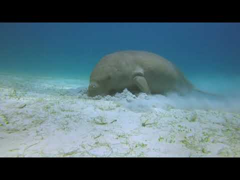 Diving in Coron-Busuanga with the Dugong
