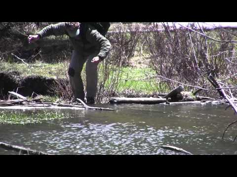 Episode 2: Rio Grande Cutthroat Trout in Northern New Mexico