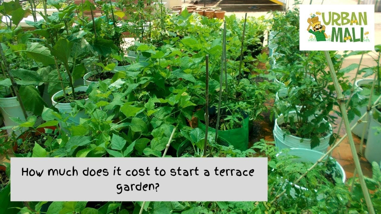 How Much Does It Cost To Start A Terrace Garden Bangalore Gardener Youtube